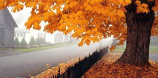 28 листопада: яке сьогодні свято і день ангела - today.ua