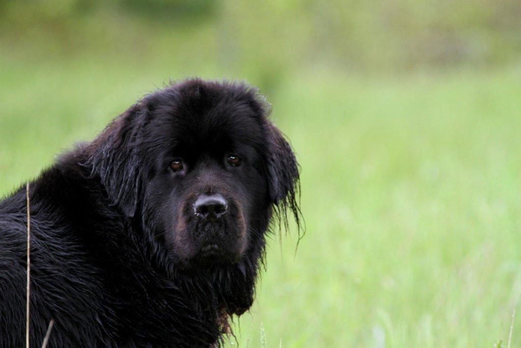 ТОП-5 собак, готових завжди прийти на допомогу людині