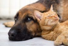 ТОП-5 пород собак, которые дружат с кошками - today.ua