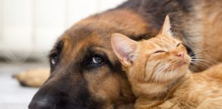 ТОП-5 порід собак, які товаришують з кішками - today.ua
