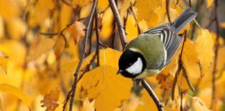 15 листопада: яке сьогодні свято і день ангела - today.ua