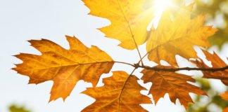 Майже весна: синоптики прогнозують різке потепління на 4 листопада - today.ua
