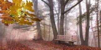 Прогноз погоди: Зима переноситься - синоптики розповіли про погоду до кінця тижня - today.ua
