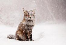 Зима скоротиться на місяць: синоптики здивували несподіваним прогнозом - today.ua