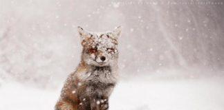 Зима сократится на месяц: синоптики удивили неожиданным прогнозом - today.ua