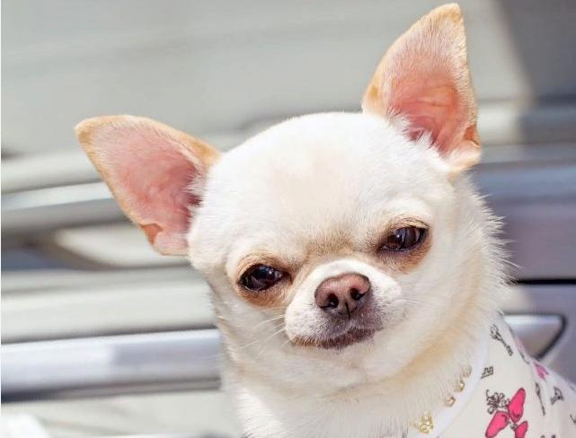 ТОП-3 породи собак, які можуть вкусити без причини