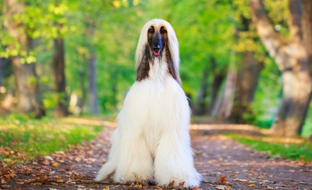ТОП-5 найбільш неслухняних порід собак