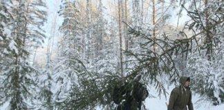 До 34 тыс. грн: За незаконную вырубку елок украинцам грозит штраф - today.ua