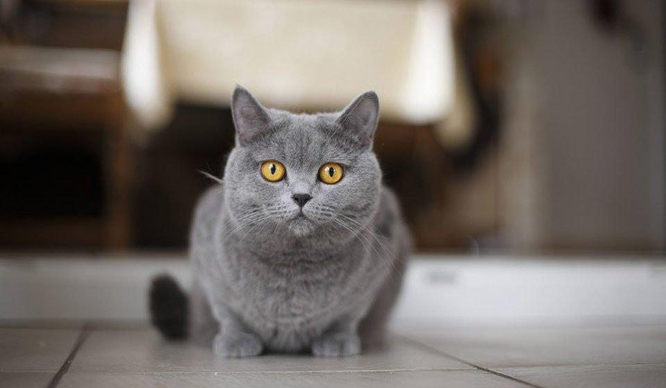 Найкращі домашні тварини за знаком Зодіаку: гороскоп сумісності