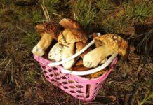 Ідеальний день для збору грибів: Синоптики обрадували прогнозом погоди - today.ua