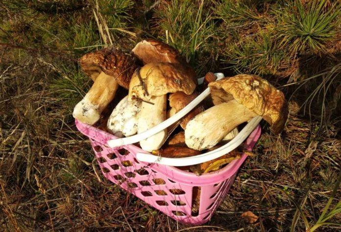 Идеальный день для сбора грибов: Синоптики обрадовали прогнозом погоды - today.ua