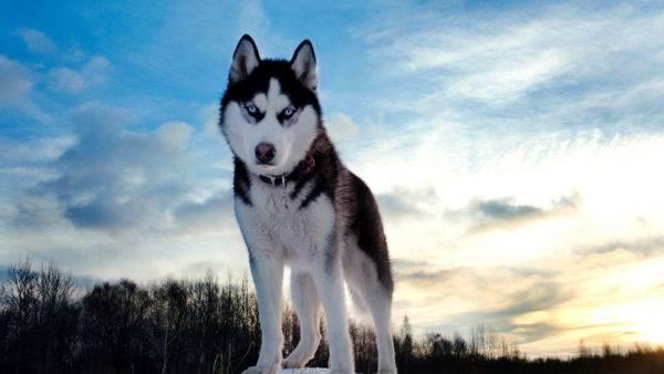ТОП-3 найрозумніших та найкрасивіших породи собак