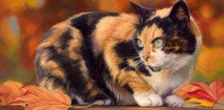 Яка порода кішок оберігає від пристріту і привертає благополуччя - today.ua