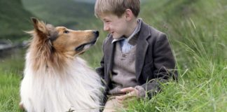 ТОП-5 самых верных пород собак в мире - today.ua