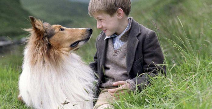 ТОП-5 найвірніших порід собак у світі - today.ua