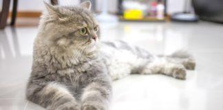 ТОП-5 порід котів, які з'явились за останні роки - today.ua