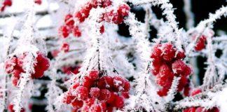 Мороз -10: в Україні очікують прихід справжньої зими - today.ua