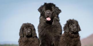 ТОП-5 самых тихих пород собак - today.ua