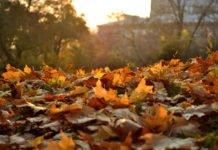 Погода на завтра: синоптики прогнозируют похолодание - today.ua