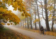 Зима на пороге: синоптики дали прогноз на 20 ноября - today.ua