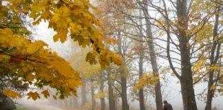 """Зима на порозі: синоптики дали прогноз на 20 листопада """" - today.ua"""