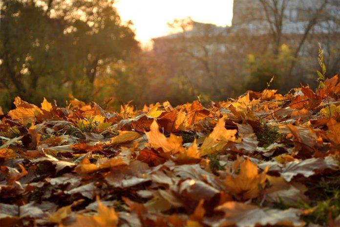 Погода на завтра: синоптики прогнозують похолодання - today.ua