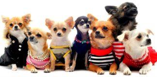 ТОП-10 кращих собак для квартири - today.ua