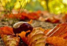Прогноз погоди на 13 листопада: в Україні дощитиме - today.ua