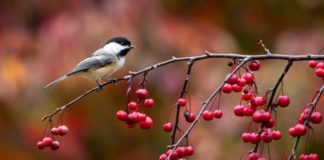 8 листопада: яке сьогодні свято, і що не можна робити - today.ua