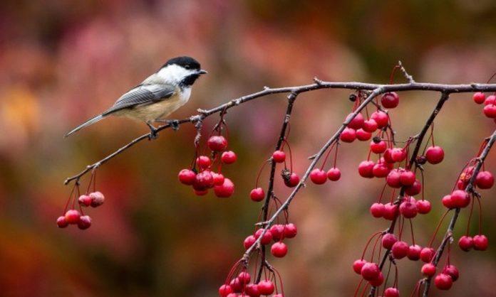 8 листопада: яке сьогодні свято, і що не можна робити