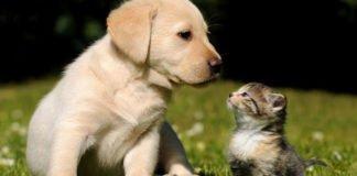 Найкращі домашні тварини за знаком Зодіаку: гороскоп сумісності - today.ua