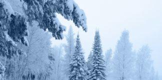 Аномальне потепління і дощі зі снігом: синоптики здивували прогнозом на грудень - today.ua