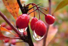 Прогноз погоды на 19 ноября: в Украине будет дождливо, но тепло - today.ua