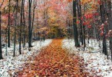 Ударят морозы: прогноз погоды до конца ноября - today.ua