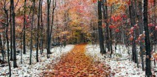 Вдарять морози: прогноз погоди до кінця листопада - today.ua