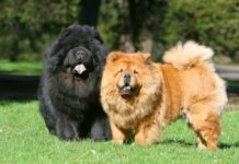 ТОП-5 самых непослушных пород собак - today.ua