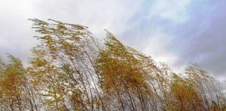 Прогноз погоди на 12 листопада: на Україну насуваються вітри та похолодання - today.ua