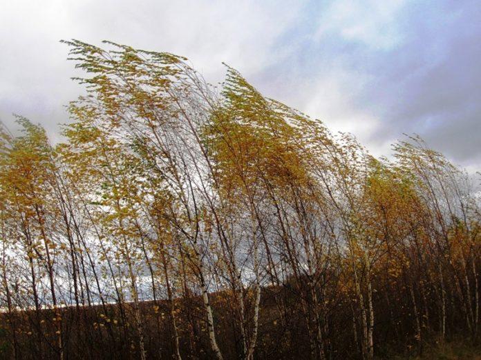 Прогноз погоди на 12 листопада: на Україну насуваються вітри та похолодання