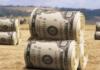 Відкриття ринку землі: озвучена вартість гектара - today.ua