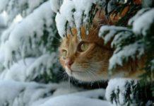Зима начнется по-зимнему: синоптики дали прогноз погоды на декабрь - today.ua
