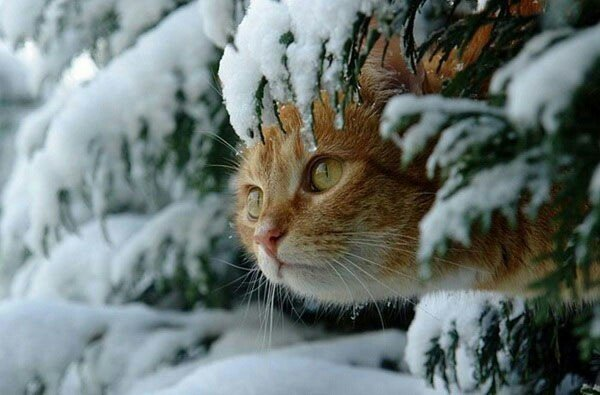 Зима почнеться по-зимовому: синоптики дали прогноз погоди на грудень - today.ua