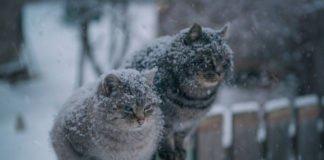 """Україну замете снігом: синоптики попередили про різку зміну погоди"""" - today.ua"""