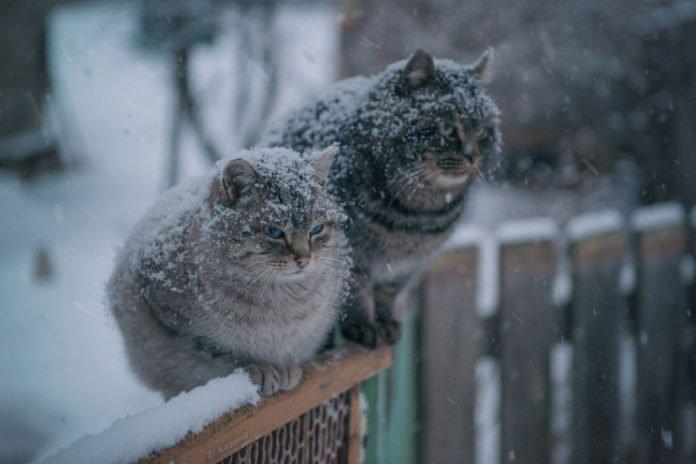 Україну замете снігом: синоптики попередили про різку зміну погоди - today.ua