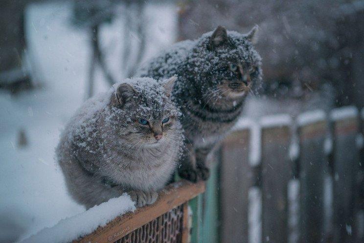 3 декабря: какой сегодня праздник и день ангела - today.ua