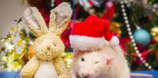 Год металлической крысы: что надеть на Новый год 2020, чтобы привлечь удачу - today.ua