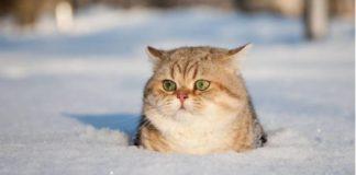 """До мінус 42 в січні: в Україну прийдуть люті морози"""" - today.ua"""
