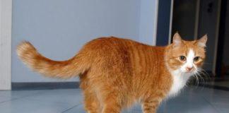 """Відео з рудим котом """"підірвало"""" мережу: пухнастик заговорив зі своїм господарем"""" - today.ua"""