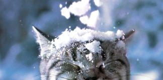 """14 декабря: какой сегодня праздник и что нельзя делать"""" - today.ua"""