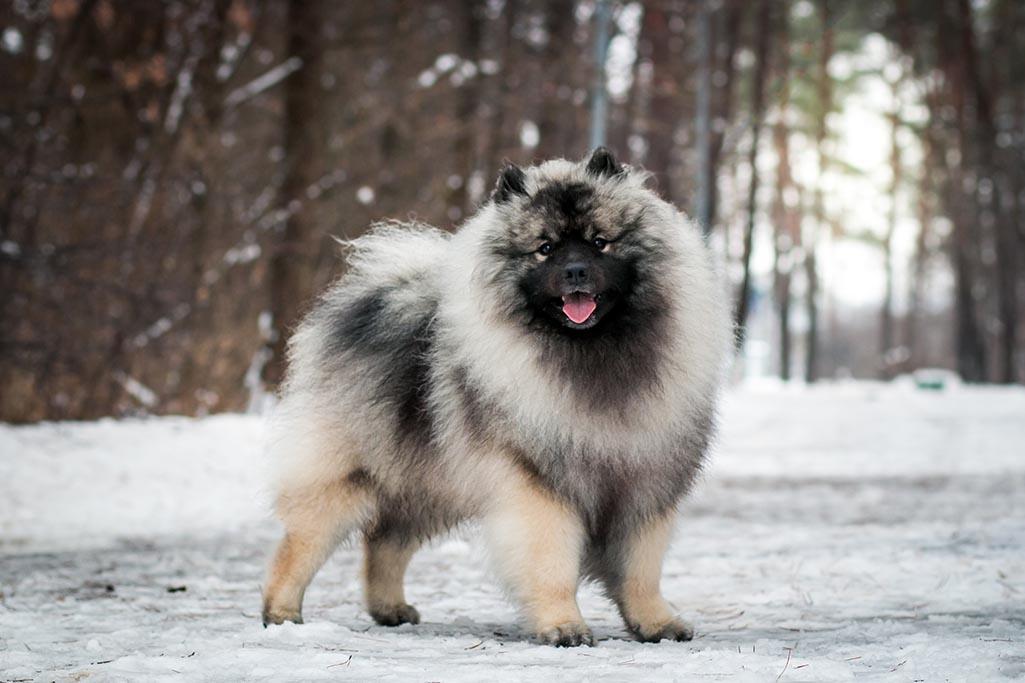ТОП-3 порід собак для людей похилого віку