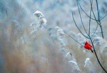 Погода на вихідні: дощі та мокрий сніг - today.ua